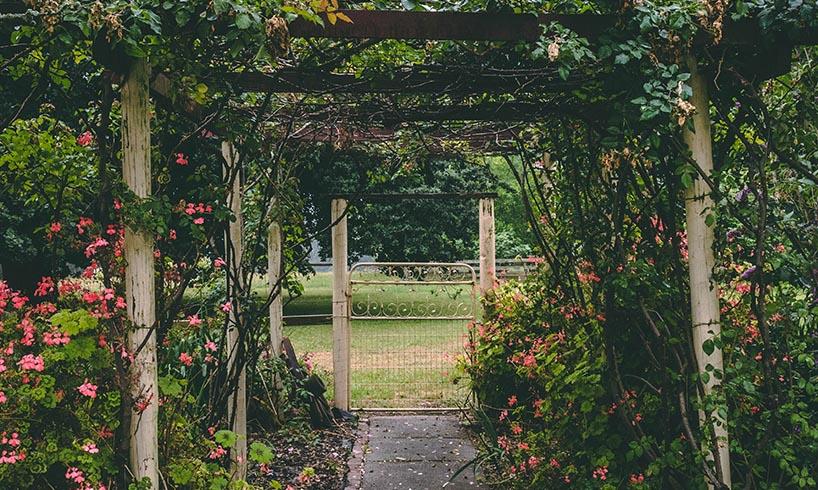 garden alley flowers